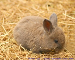 I hereby dub this the Bayes Bunny.